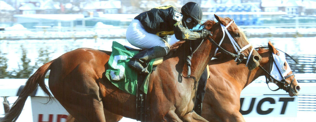 Bella The Bandit runs 1st Place @ Aqueduct On 2/10/14