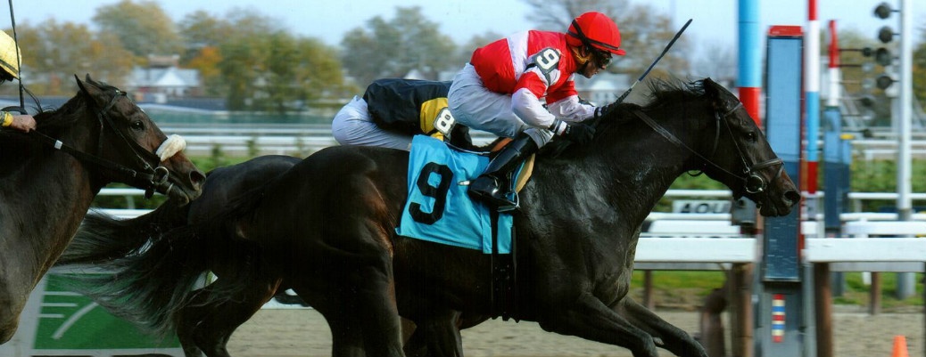 Scat Away runs 1st Place @ Aqueduct On 11/9/14