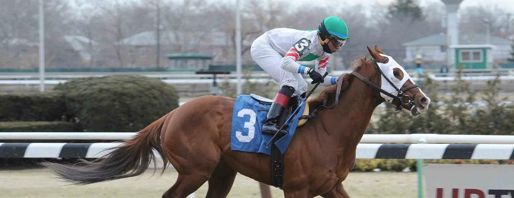Gypsum Johnny runs 1st Place @ Aqueduct On 3/15/2015
