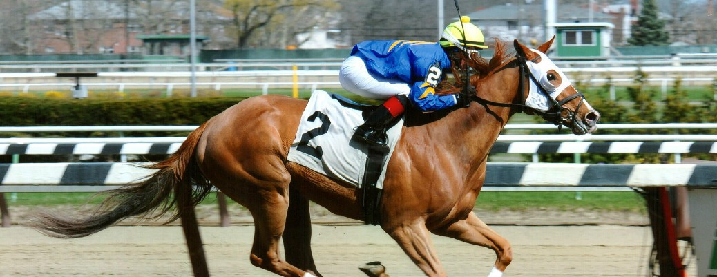 Bella The Bandit runs 1st Place @ Aqueduct On 4/16/2015